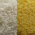 Dedicamos el programa de hoy al arroz de moda, el arroz dorado.